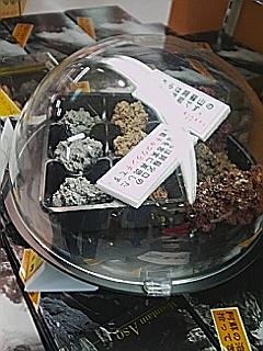 チョコと溶岩の比較